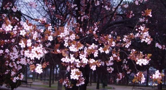 blossom-3
